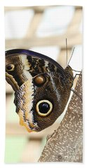 Yellow-edged Giant Owl Butterfly #4 Beach Sheet by Judy Whitton