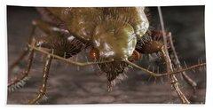 Bedbug Cimex Lectularius Beach Towel
