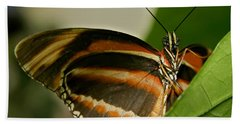 Beach Sheet featuring the photograph Butterfly by Olga Hamilton