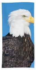Bald Eagle Haliaeetus Leucocephalus Beach Towel