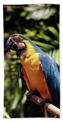 1960s Blue And Yellow Macaw Parrot Beach Towel