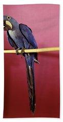 1960s Purple Hyacinthine Macaw On Perch Beach Towel