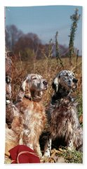 1960s Two English Setter Dogs Sitting Beach Towel