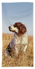 1970s Hunting Dog In Autumn Field Beach Towel