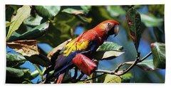 1990s Scarlet Macaw Ara Macao In Almond Beach Towel