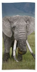 African Elephant Loxodonta Africana Beach Towel by Panoramic Images