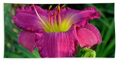 Beach Towel featuring the photograph Bela Lugosi Daylily by Suzanne Stout