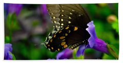 Black Swallowtail Beach Sheet