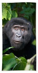 Close-up Of A Mountain Gorilla Gorilla Beach Towel by Panoramic Images