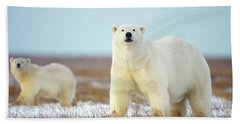 Female Polar Bear With Spring Cub Beach Towel