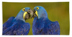 Hyacinth Macaws Beach Towel
