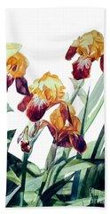 Watercolor Of Tall Bearded Irises I Call Iris La Vergine Degli Angeli Verdi Beach Towel