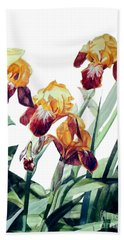 Watercolor Of Tall Bearded Irises I Call Iris La Vergine Degli Angeli Verdi Beach Sheet
