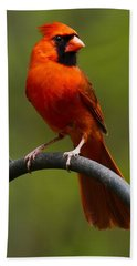 Male Cardinal Beach Towel