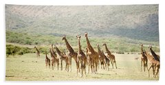 Masai Giraffes Giraffa Camelopardalis Beach Towel