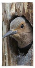 Northern Flicker In Nest Cavity Alaska Beach Towel