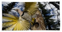 Northern Flicker Leaving Nest Cavity Beach Towel