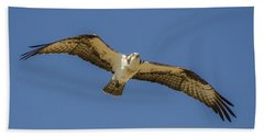 Beach Towel featuring the photograph Osprey In Flight Spreading His Wings by Dale Powell