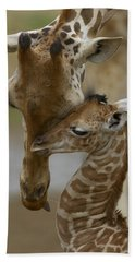 Beach Towel featuring the photograph Rothschild Giraffe And Calf by San Diego Zoo
