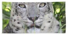 Snow Leopard Beach Sheet by John Telfer