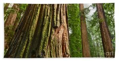 The Beautiful And Massive Giant Redwoods Sequoia Sempervirens In Redwoods National Park. Beach Towel