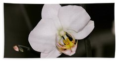 Beach Towel featuring the photograph White Orchid by Sherman Perry