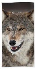Wolf In Winter Beach Towel