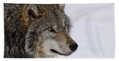 Timber Wolf Pictures Beach Towel