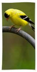 American Goldfinch Beach Sheet