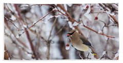 Cedar Waxwing Beach Sheet