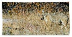 Coyotes Beach Towel