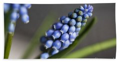 Grape Hyacinth Beach Sheet by Nailia Schwarz