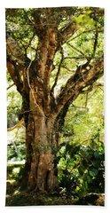 Kingdom Of The Trees. Peradeniya Botanical Garden. Sri Lanka Beach Towel