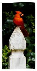 Male Cardinal Beach Sheet