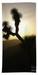 New Photographic Art Print For Sale Joshua Tree At Sunset Beach Sheet