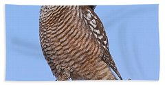 Northern Hawk Owl Beach Towel