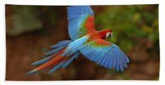Red And Green Macaw Flying  Brazil Beach Towel