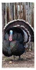 Strutting Turkey Beach Sheet