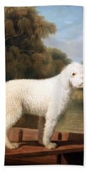 Stubbs' White Poodle In A Punt Beach Towel by Cora Wandel