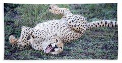Cheetah Acinonyx Jubatus Resting Beach Towel