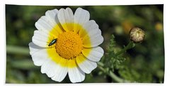 Crown Daisy Flower Beach Sheet by George Atsametakis