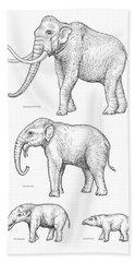 Elephant Evolution, Artwork Beach Towel by Gary Hincks