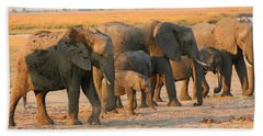Beach Sheet featuring the photograph Kalahari Elephants by Amanda Stadther