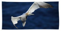 Northern Gannet In Flight Beach Towel