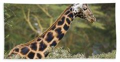 Rothschilds Giraffe Beach Towel