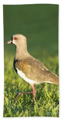 Southern Lapwing Beach Towel
