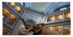 Bull Elephant In Natural History Rotunda Beach Towel