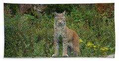 European Lynx Beach Towel