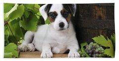 Parson Russell Terrier Puppy Beach Towel