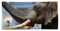 Bull Elephant In Natural History Rotunda Beach Sheet